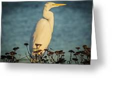 Egret At Dusk Greeting Card