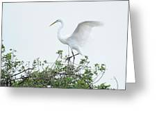 Egret Balance Greeting Card