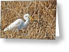 Egret Breakfast Greeting Card