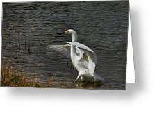 Egret Dance Greeting Card