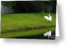 Egret Dance Greeting Card