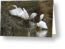 Egret Exit Greeting Card by George Randy Bass