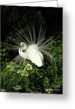 Egret Fan Dancer Greeting Card