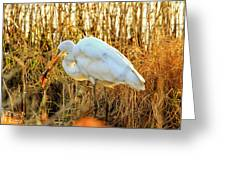 Egret Fishing In Sunset At Forsythe National Wildlife Refuge Greeting Card