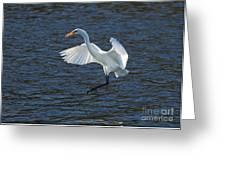 Egret Fishing Greeting Card