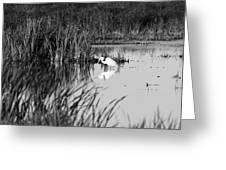 Egret - Horicon Marsh - Wisconsin Greeting Card