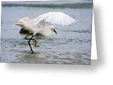 Egret Hunting Greeting Card