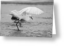 Egret Hunting In Black And White Greeting Card