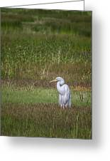 Egret In A Field, No. 1 Greeting Card