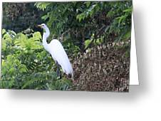 Egret In A Tree Greeting Card