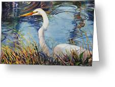 Egret In Cameron Marsh Greeting Card