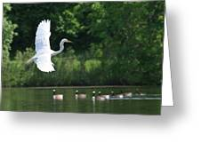 Egret In Flight With Geese Greeting Card