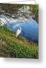 Egret In Florida Color Greeting Card
