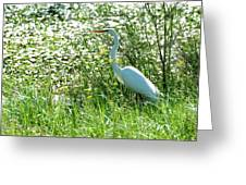 Egret In Flowers Greeting Card