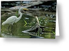 Egret In The Swamp Greeting Card