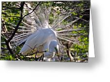 Egret In The Thicket Greeting Card