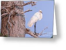 Egret In Tree Greeting Card