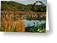 Egret Lake Greeting Card