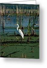 Egret Of The Marsh Greeting Card