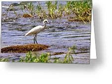 Egret On A Rock Greeting Card