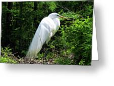 Egret On Guard Greeting Card