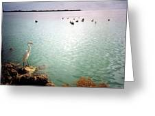 Egret On Marathon Key Greeting Card
