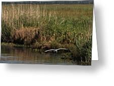 Egret On The Bayou Greeting Card
