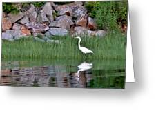 Egret On The Danvers River Greeting Card