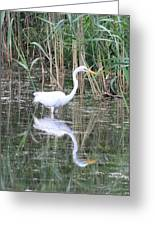 Egret On The Hunt Greeting Card