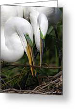 Egret Pair Greeting Card