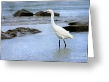 Egret Patrolling Greeting Card