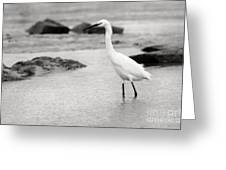 Egret Patrolling In Black And White Greeting Card
