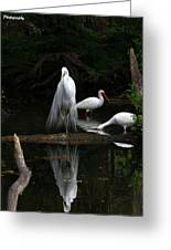 Egret Reflection Greeting Card