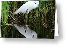 Egret Reflection Greeting Card