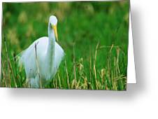 Egret Stare Down Greeting Card