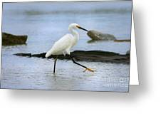 Egret Step Greeting Card