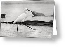 Egret Step In Black And White Greeting Card