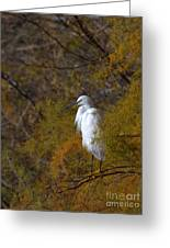 Egret Surrounded By Golden Leaves Greeting Card