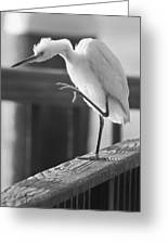 Egret Tai Chi Greeting Card