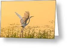 Egret Take Off 1 Greeting Card