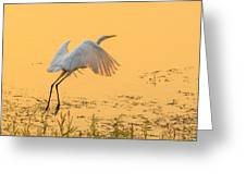 Egret Take Off 3 Greeting Card