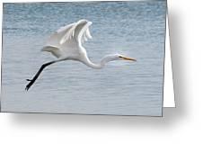 Egret Taking Off 2 Greeting Card