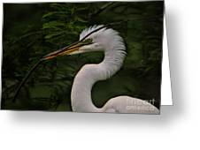Egret With Branch Greeting Card