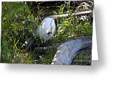 Egret With Crayfish Greeting Card