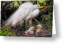 Egrets - 3362 Greeting Card