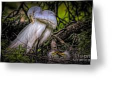 Egrets - 3399 Greeting Card