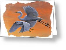 Egrets Great And Snowy Greeting Card