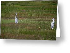Egrets In A Field Greeting Card