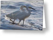 Egrets In The Shallows Greeting Card