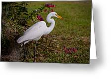 Egret's Meal Greeting Card